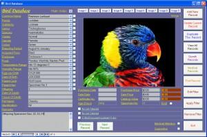 BirdScreen1